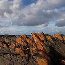 seascapes #219, orange lichen rocks by stickelsimages