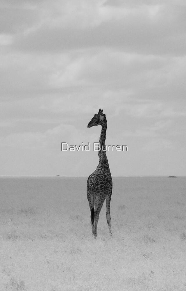 Giraffe in IR by David Burren