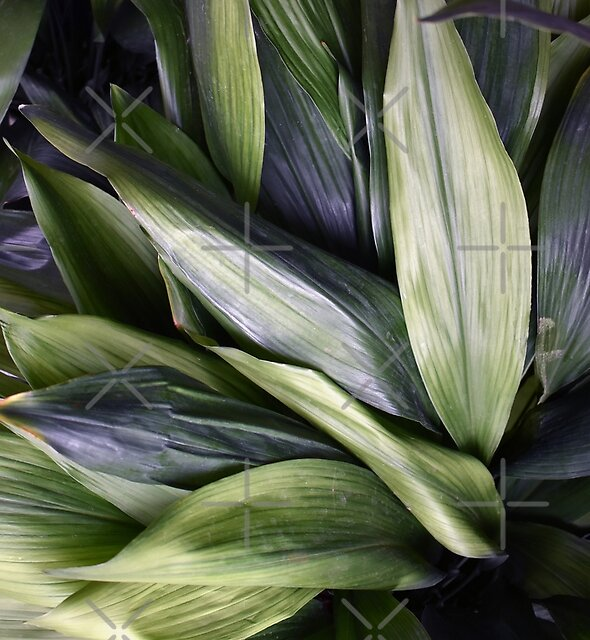 Green Leaves, Botanical Photography Art by PrintsProject