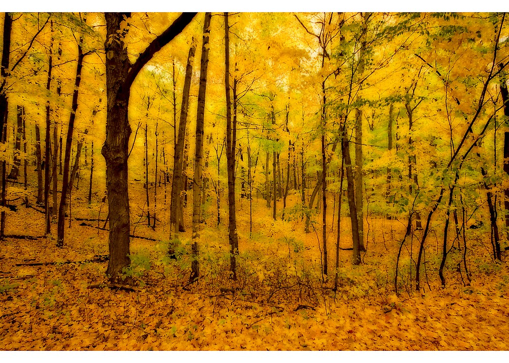 Woods at Holy  Hill by DavidHoefer