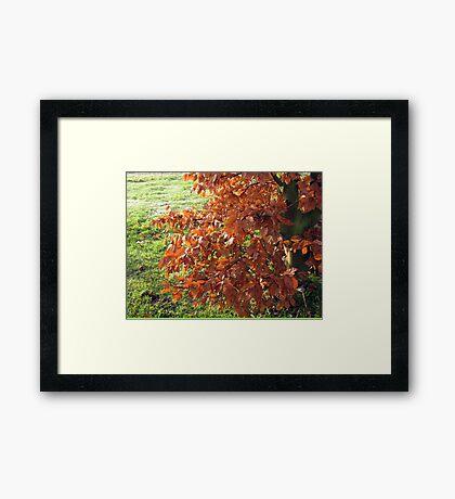 Herbstlaub und mattiertes Feld in Essex Gerahmter Kunstdruck