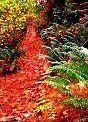fall path by sheilamunk