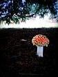 lone mushroom by sheilamunk