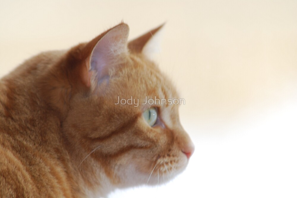 Watching.... by Jody Johnson