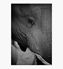 Elephant potrait Photographic Print