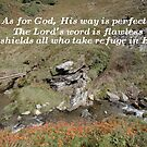 His way is perfect by Samantha Higgs