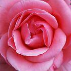 Pink flower by Hannah Lowe