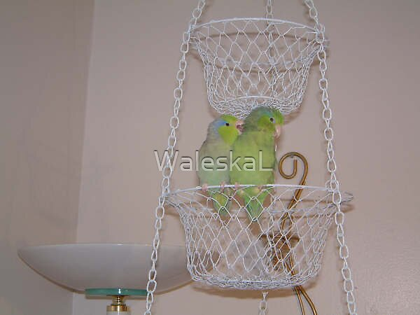 Bird Love by WaleskaL