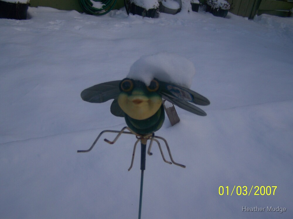 IIbur!!! The bee seys by Heather Mudge