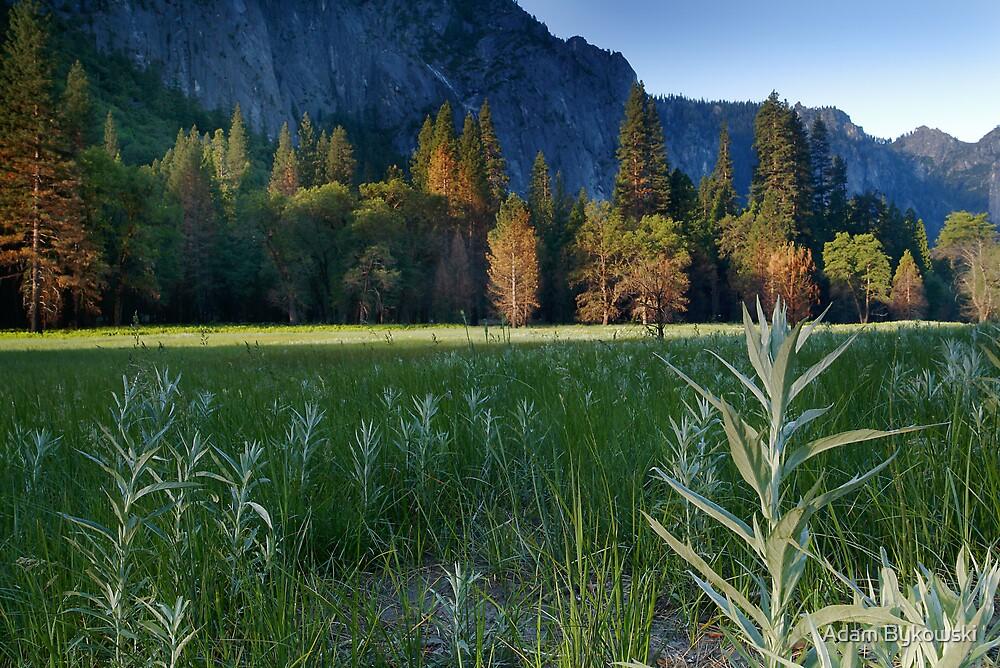 Yosemite Valley  by Adam Bykowski