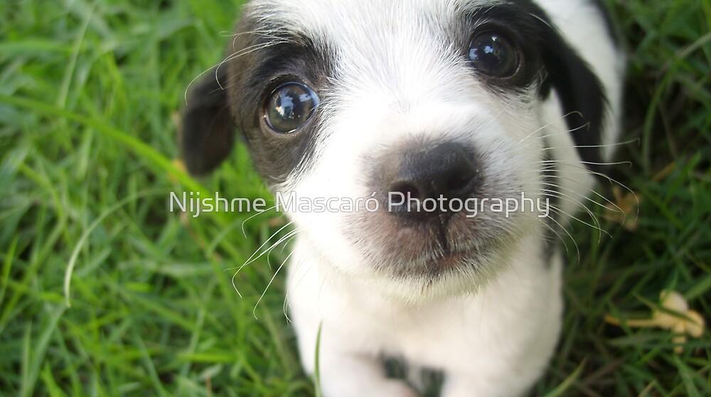 My new doggy by Nijshme Mascaró Photography
