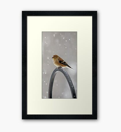 Winter Goldfinch - Falling Snow Framed Print