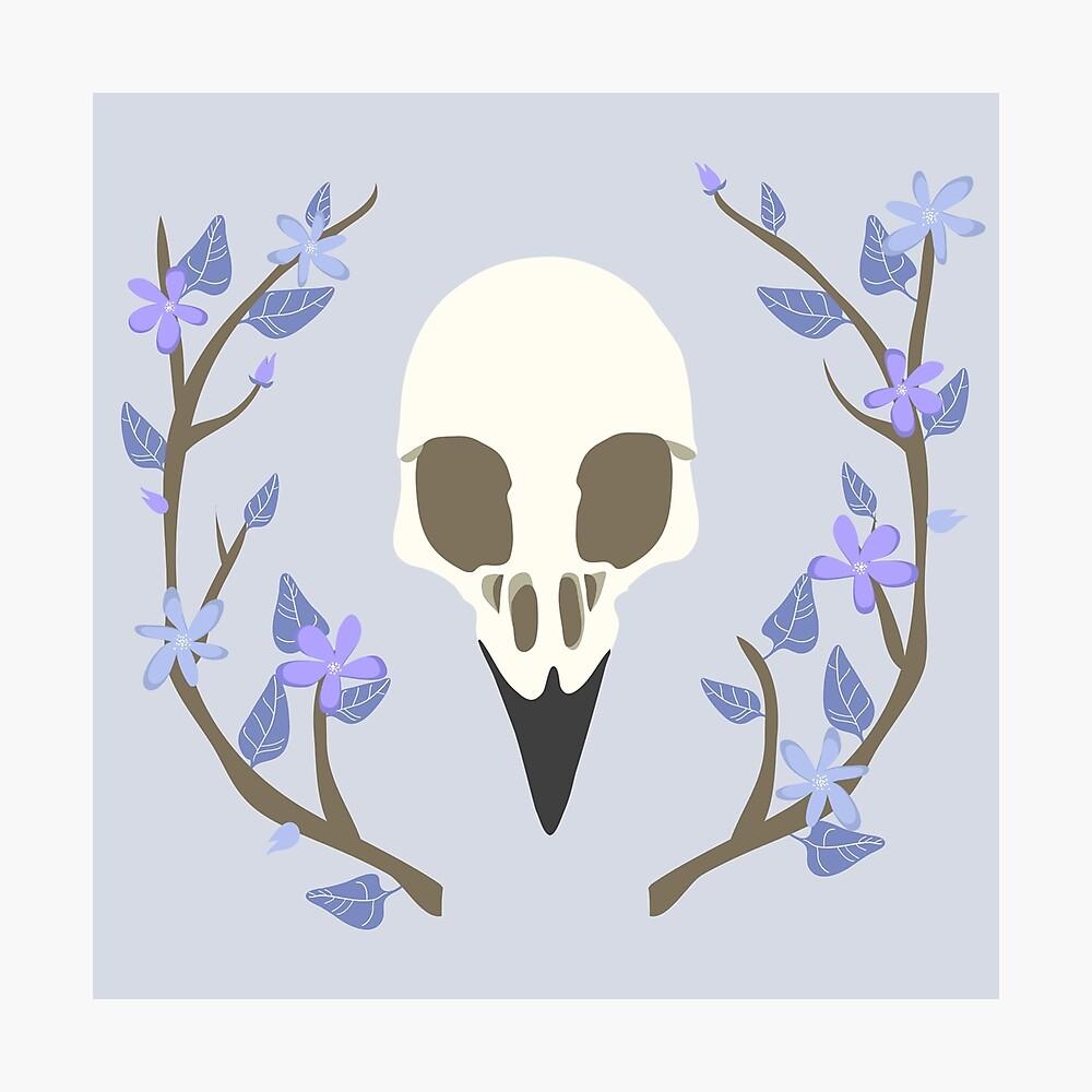 Bird Skull Photographic Print