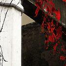 Red Wild Grapevine by Nikolay Semyonov