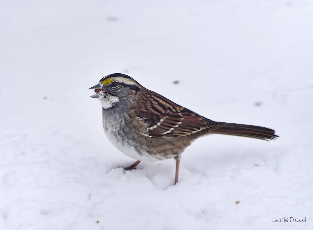 Snow Bird by Lanis Rossi