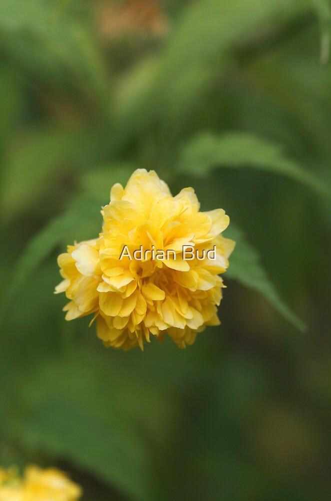 Yellow flower by Adrian Bud