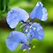 BLUE / PURPLE FLOWERS in Africa | BLOU / PERS BLOMME in Afrika