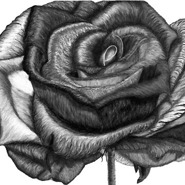 In Contrast to Color (B &W Rainbow Roses) by TheJoanofArt