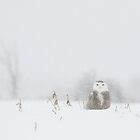Miss snowy owl and her snowflakes by Heather King