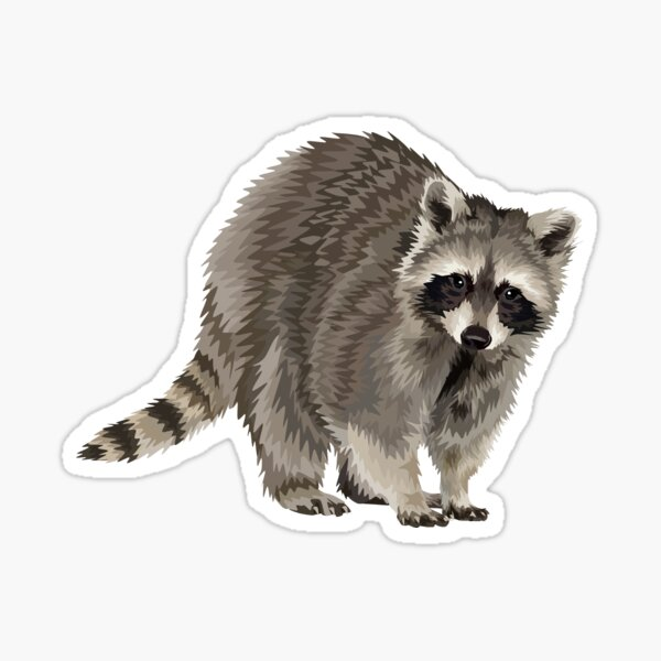Raccoon sticker Sticker