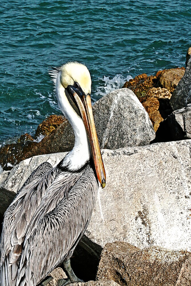 Pelican On The Rocks by JoJoeK
