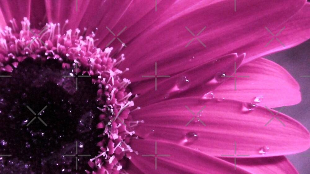 Lovely Pink by nasera