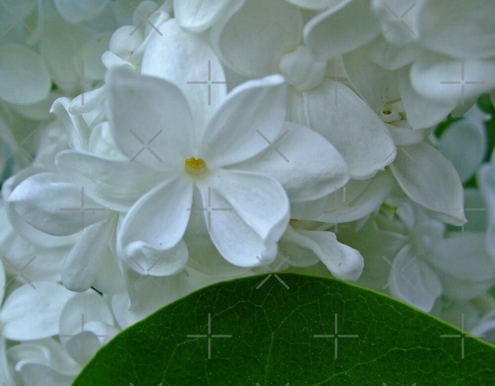sweet jasmine by poupoune