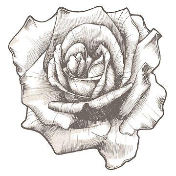 Rose by Kiwix