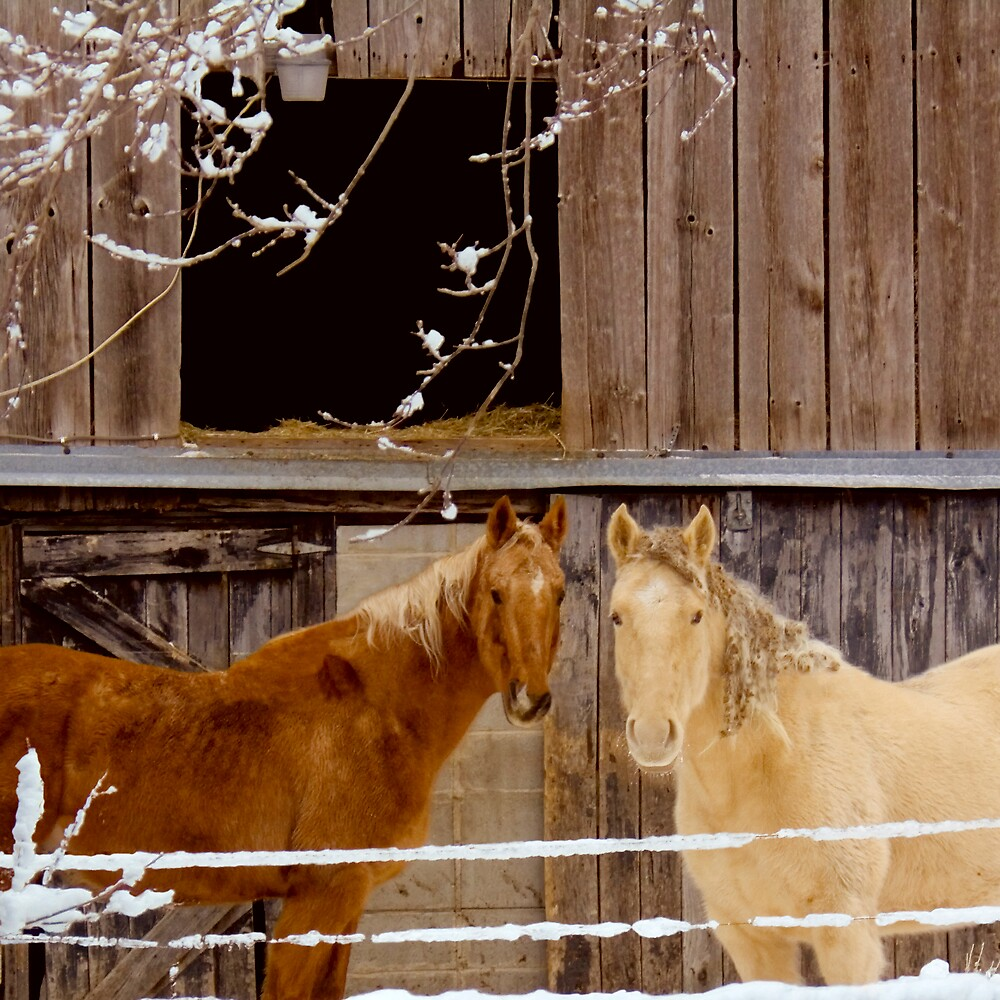Horses in Winter by DavidHoefer