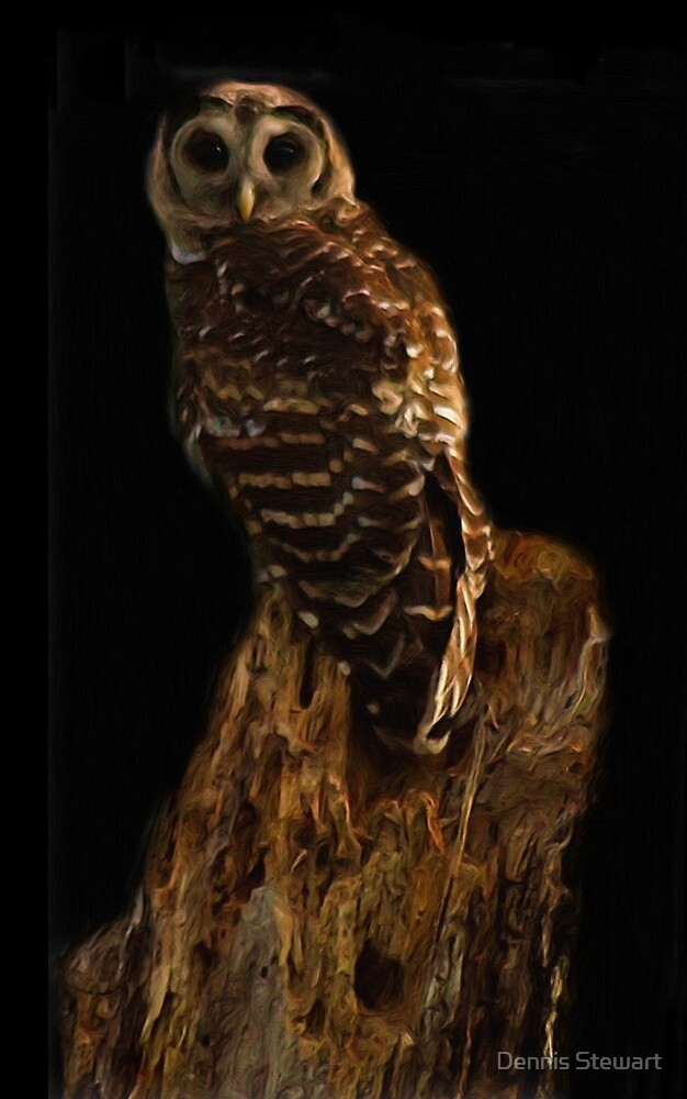 Barred Owl Painting by Dennis Stewart