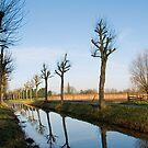 De Lieve by Dirk Delbaere
