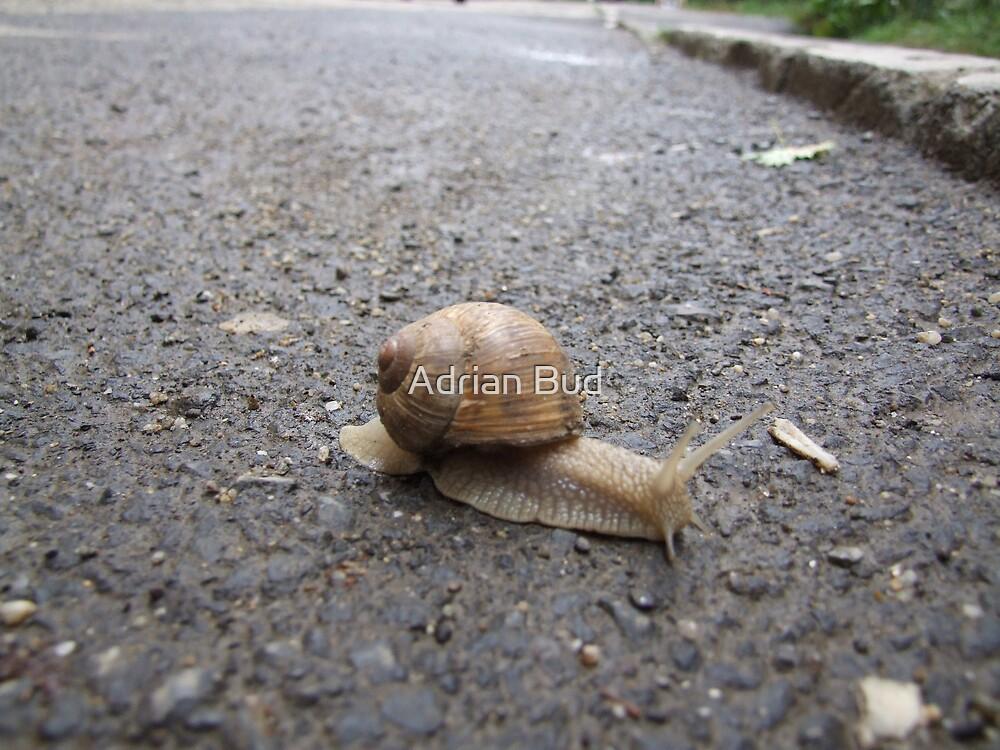 snail 2 by Adrian Bud