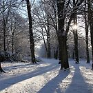 Winter Shadows by John Dalkin