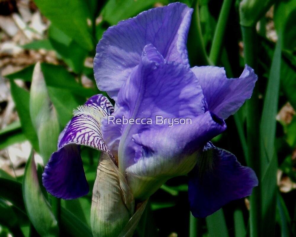 Iris by Rebecca Bryson