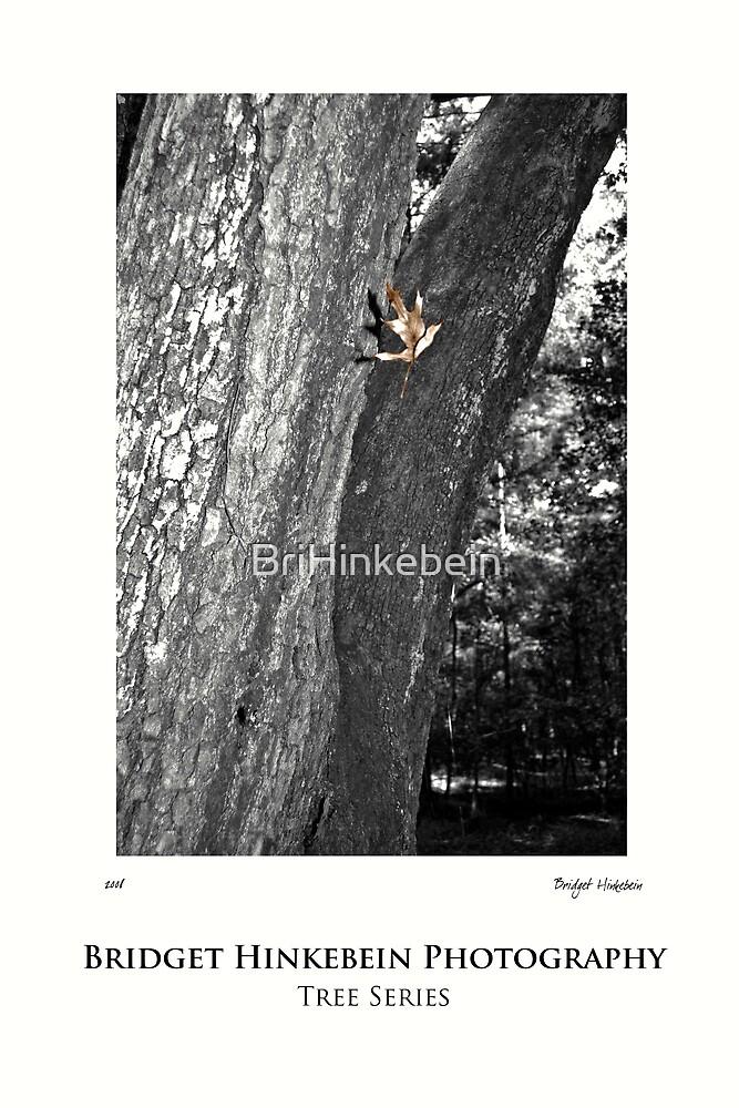Tree Series  by BriHinkebein