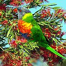 Rainbow Lorikeet by Bev Pascoe