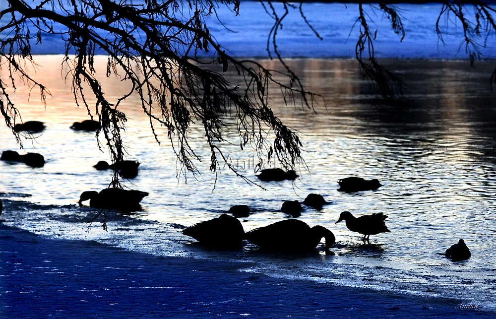 Ducks At Dusk by Anibal