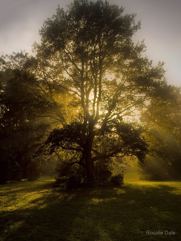 A Magic Faraway Tree? by Rosalie Dale