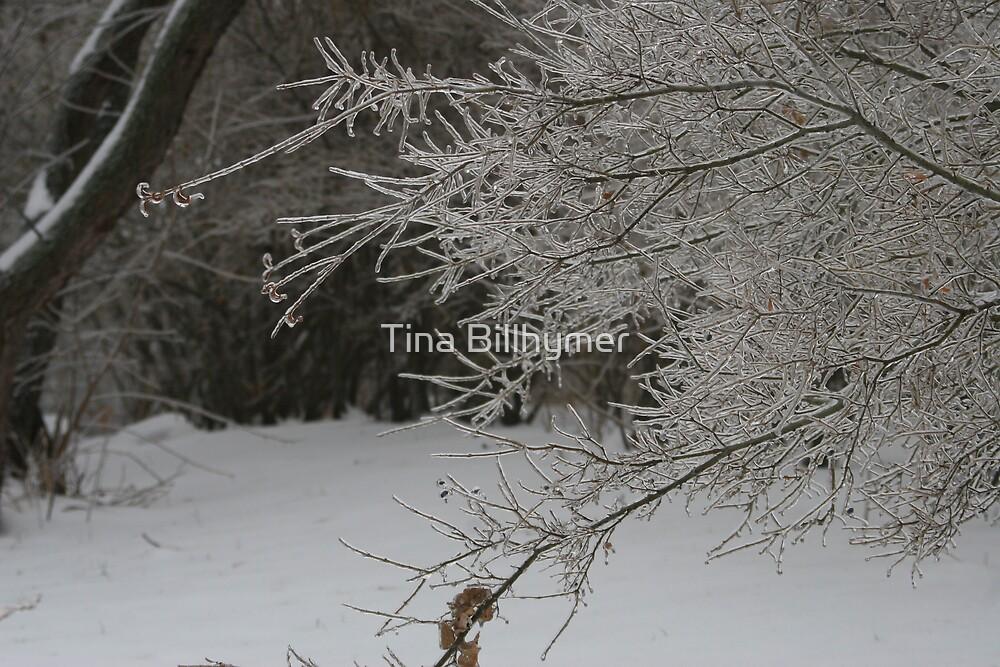 Winter Wonderland by Tina Billhymer