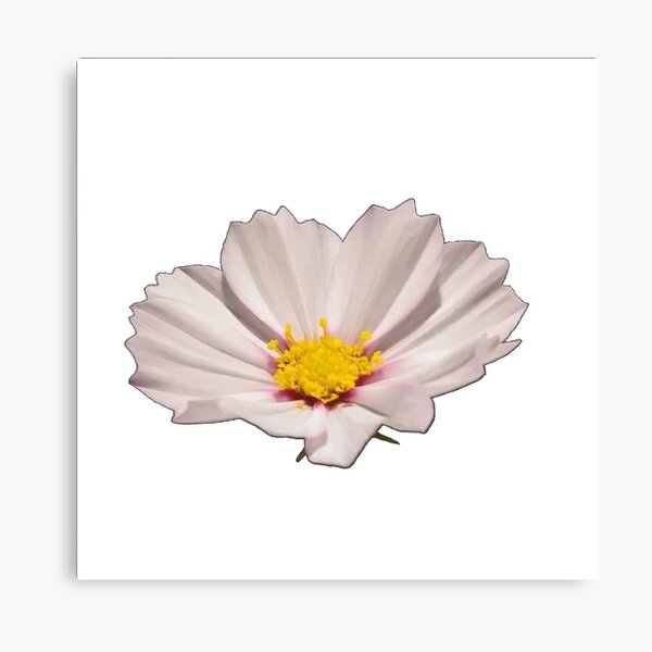 Flower with yellow center Canvas Print