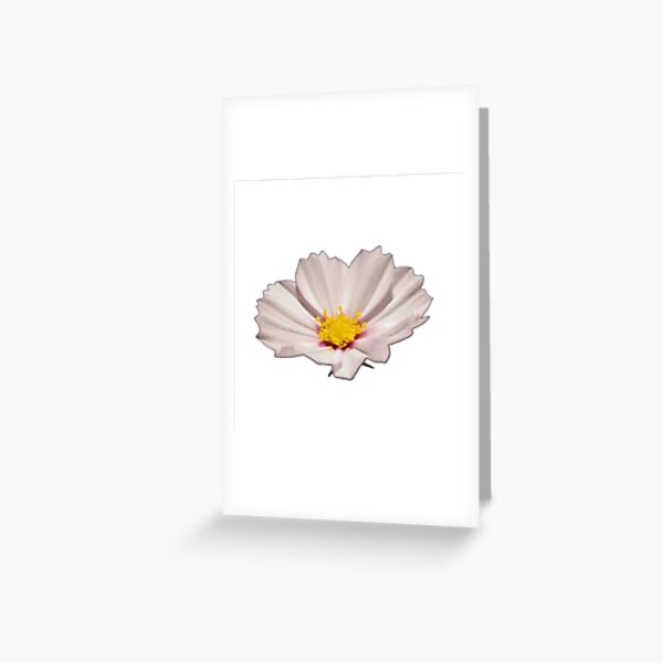 Flower with yellow center Greeting Card