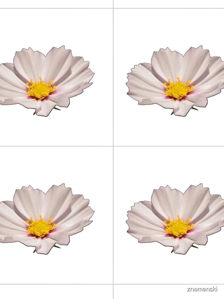Flower with yellow center by znamenski