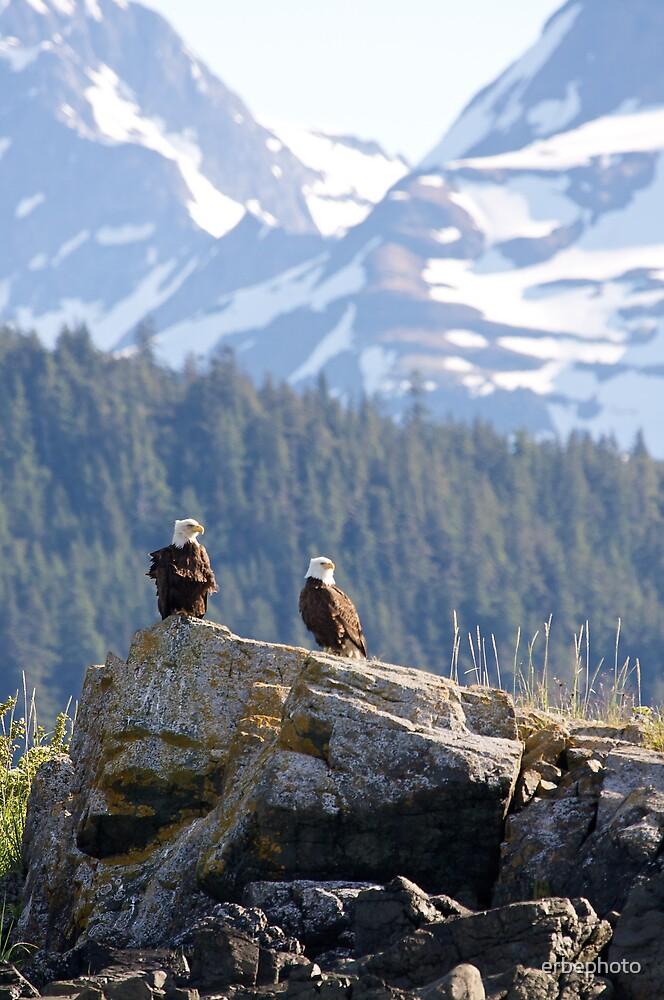 Bald Eagles by erbephoto