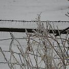 Icy fence by Tina Billhymer