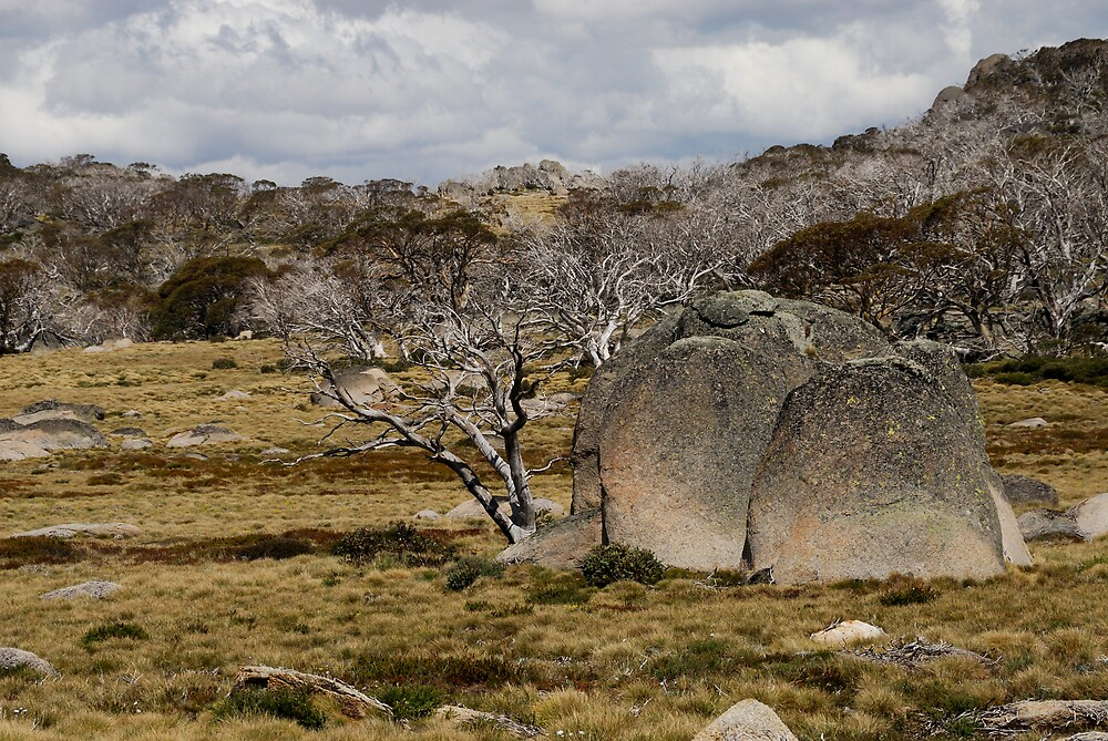 High country - rocks and snowgums. by Richard  Stanley