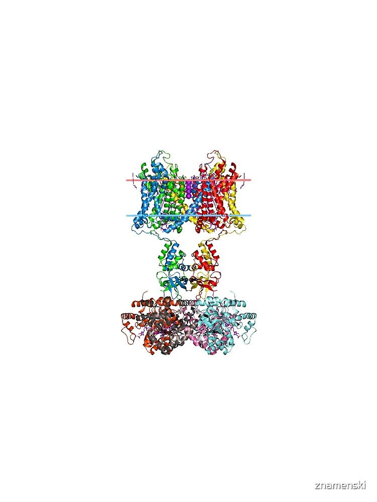 This giant biological molecule is an ion channel by znamenski