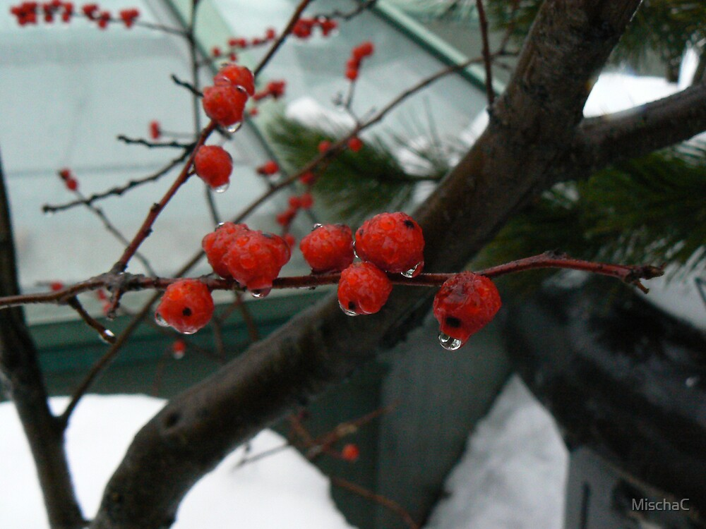 iced red berries by MischaC