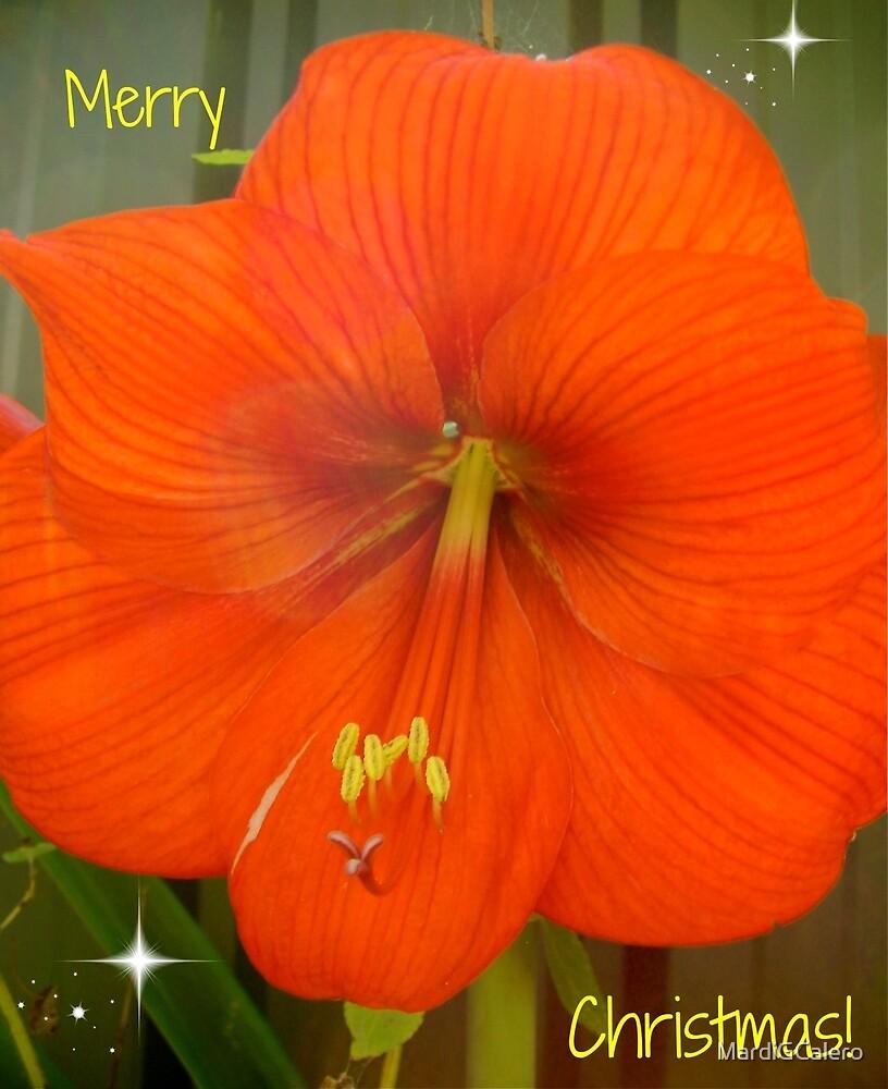 Hipiastrum from my Garden by MardiGCalero
