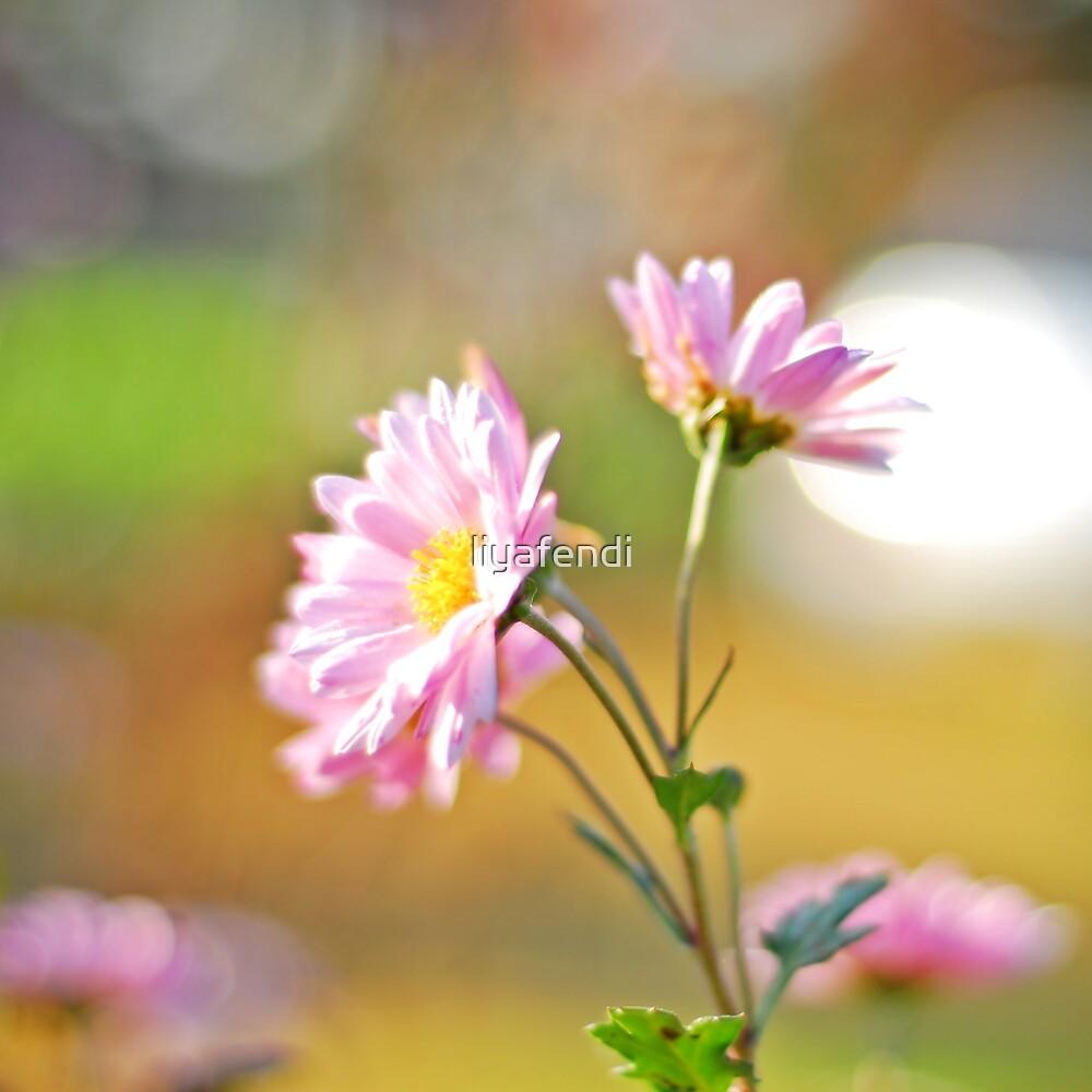 Pink daisy by liyafendi
