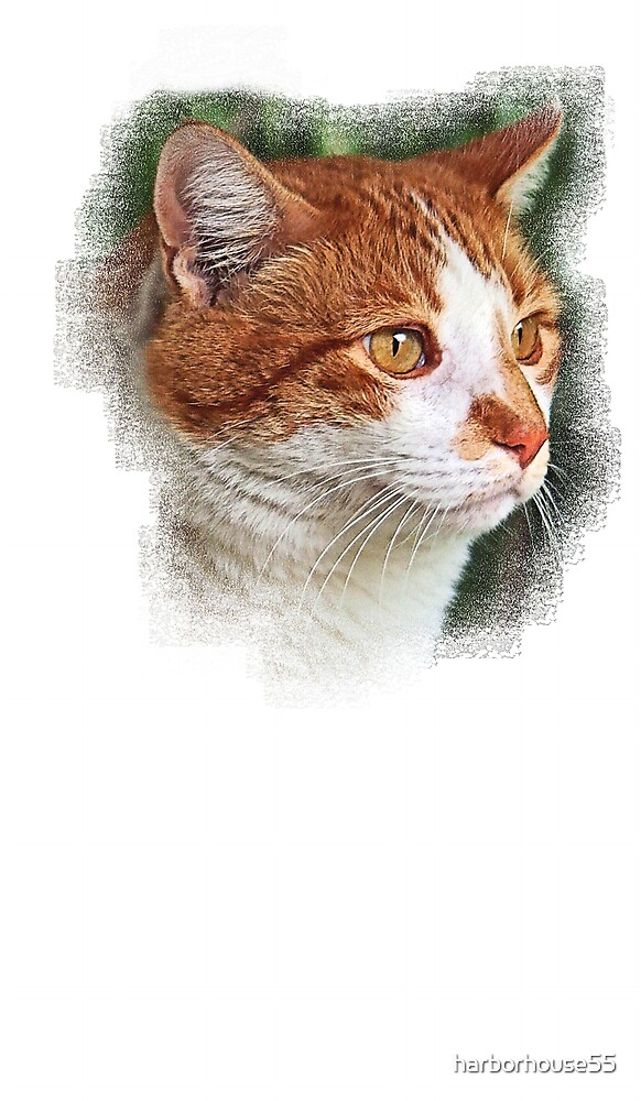 Cat Chalk by harborhouse55